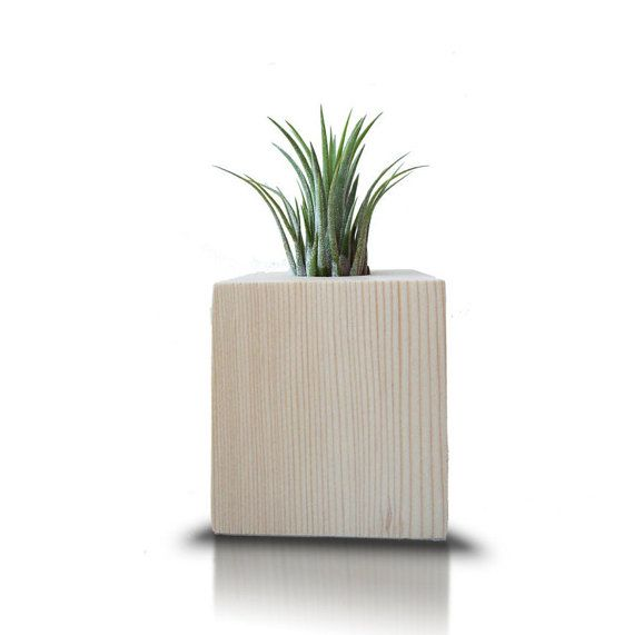 Hey, I found this really awesome Etsy listing at https://www.etsy.com/listing/458432388/air-plant-holder-tillandsia-holder-home