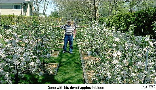 trees room to grow mini farm rose bush apple orchard garden trees
