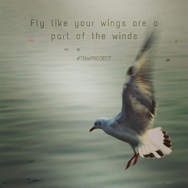 Fly Like Your Wings Are A Part Of The Wings Flyinghigh Bird