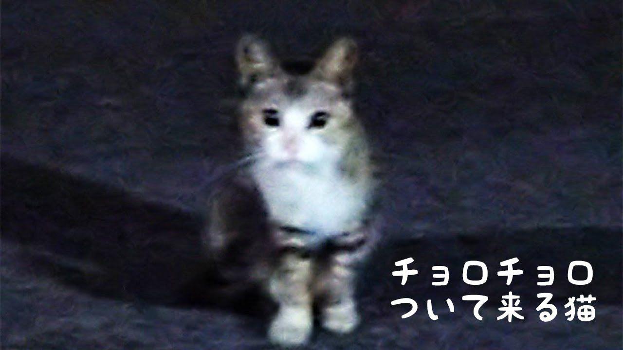 私の帰りを待っているかわいい野良猫ちゃん 1 チョロチョロ後をついて来る 野良猫 かわいい 猫 家