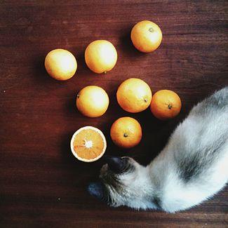 annette pehrsson / blog