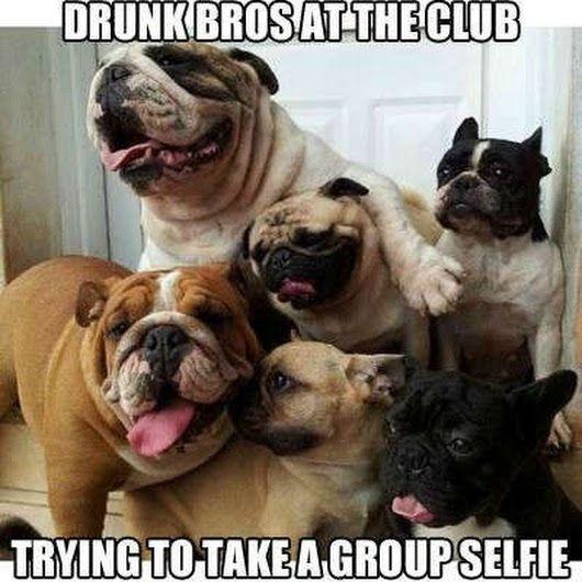 Funny Animal Pics 036 #funnyanimalpics