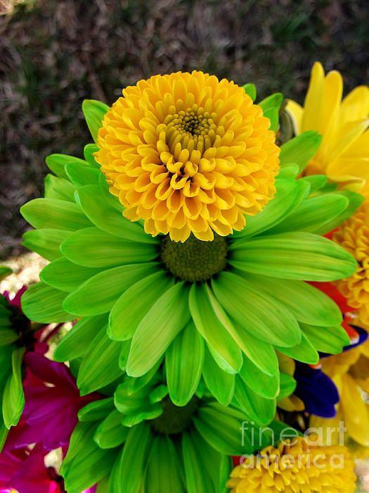 Fleur Verte Angela Pari Dominic Chumroo Pari Chumroo Products