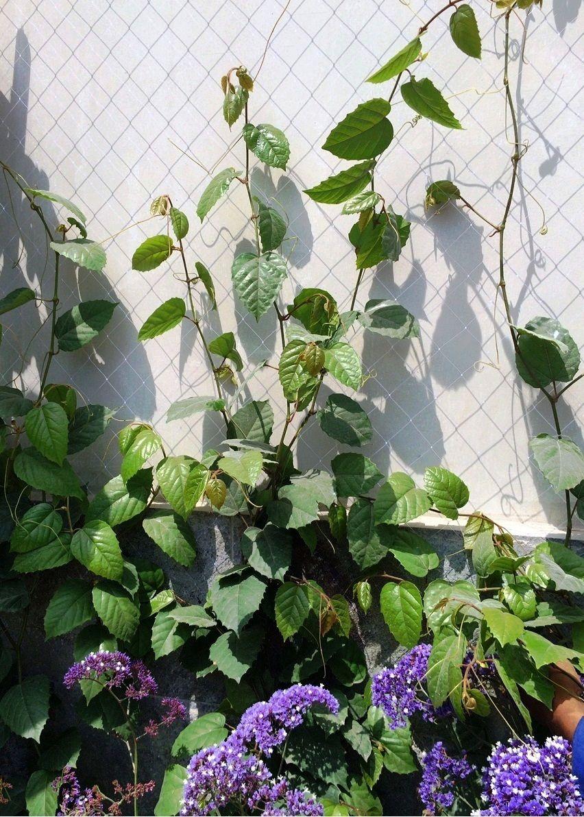 Instalacion de mallas en jardines para enredaderas - Mallas para jardin ...