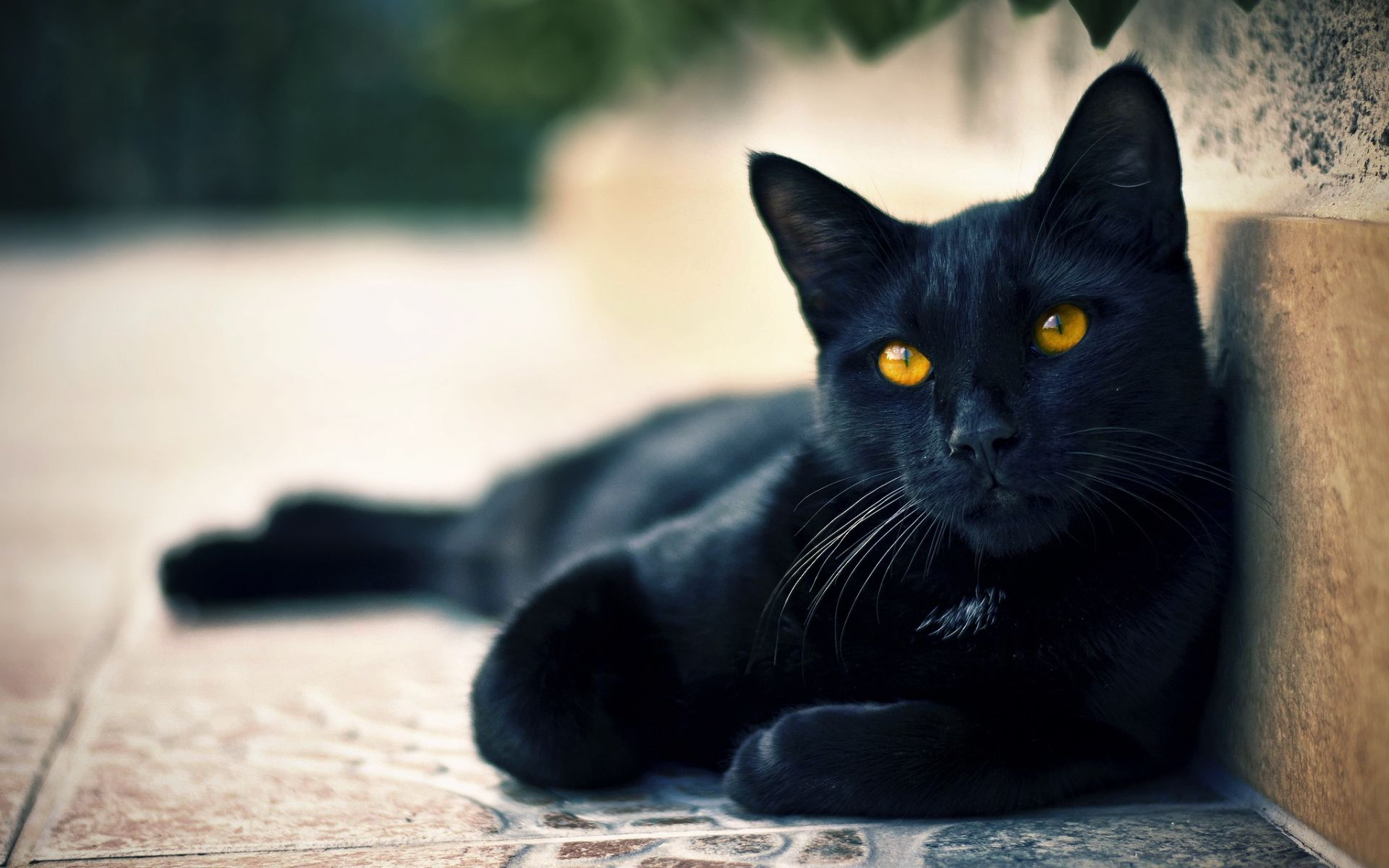 Hd Black Cats Wallpaper Cat Yellow Eyes Pictures Photos Images