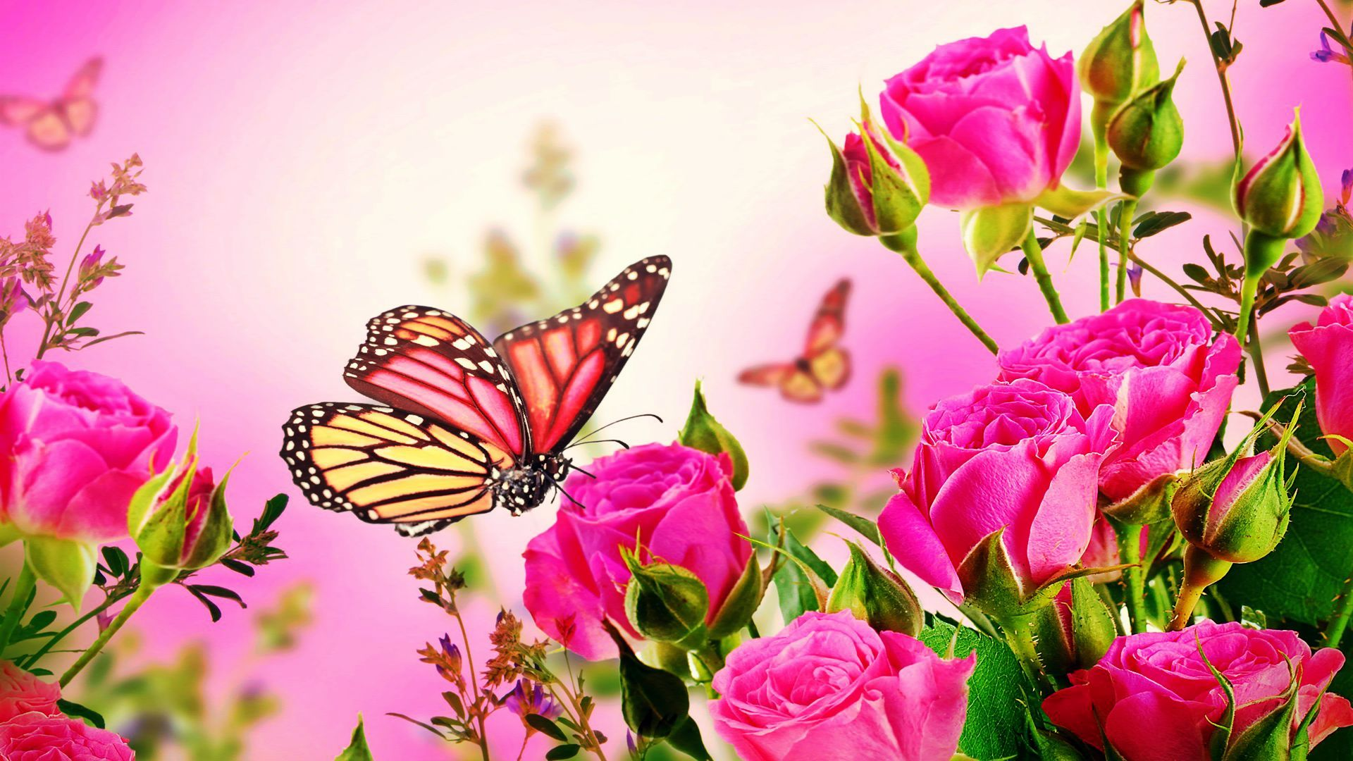 Pink Rose Butterfly Wallpaper Of Pink Roses Flowers