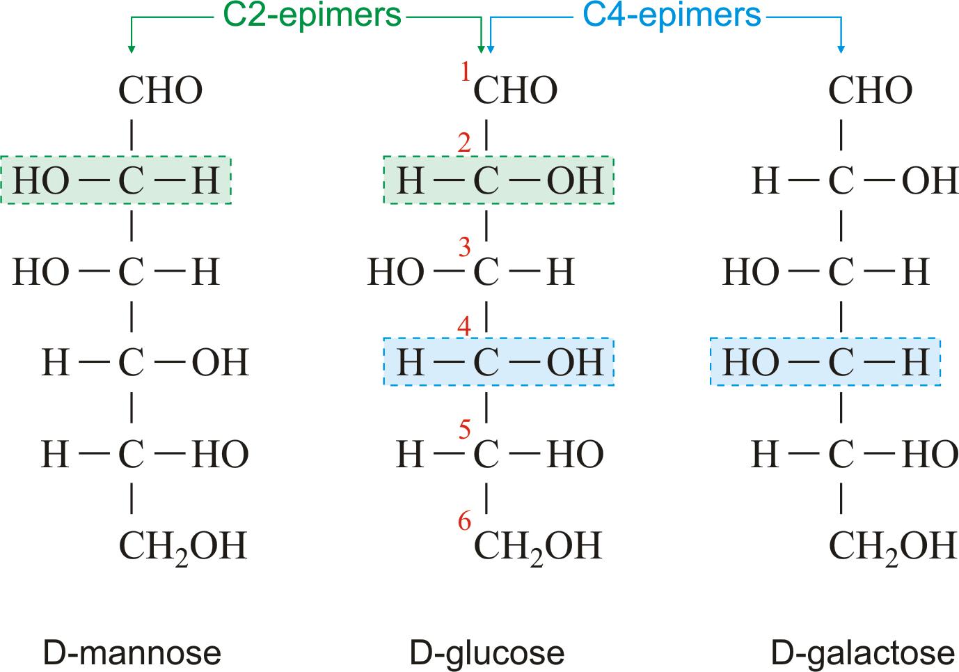 D Galactose D-galactose and D-gluc...