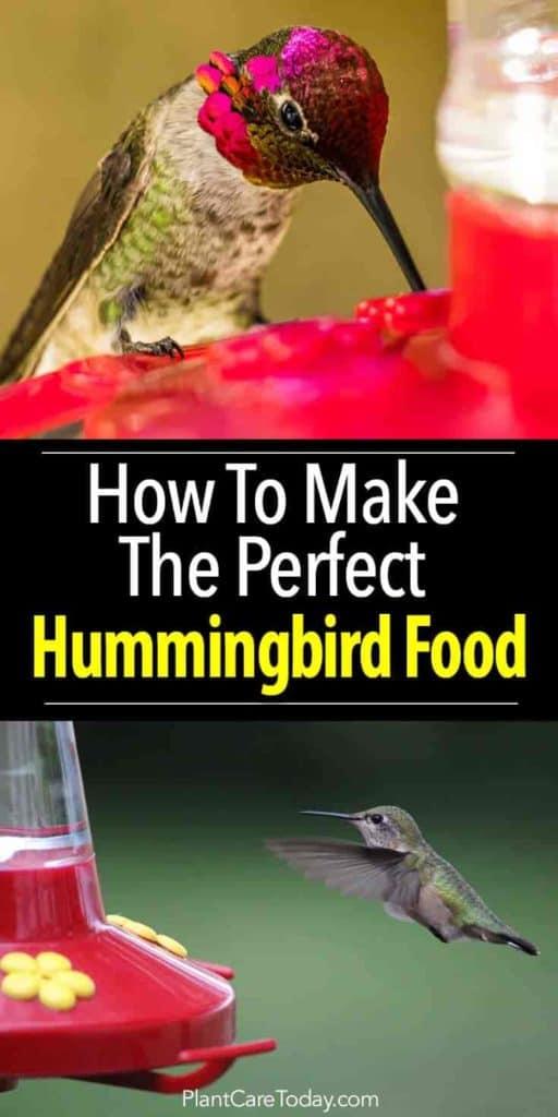 How To Make Hummingbird Food A Perfect Recipe