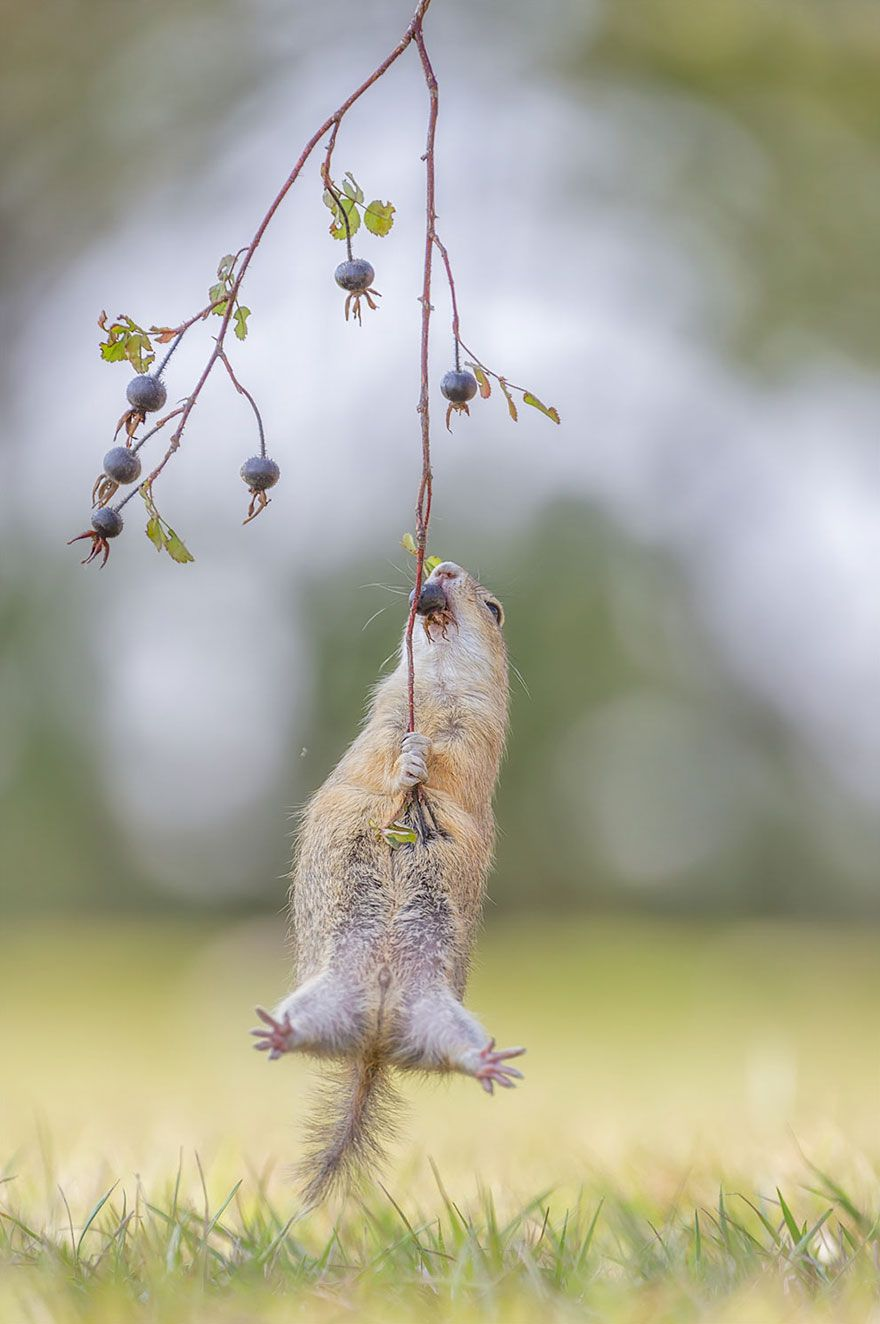 Winners of the Comedy Wildlife Photography Awards 2017