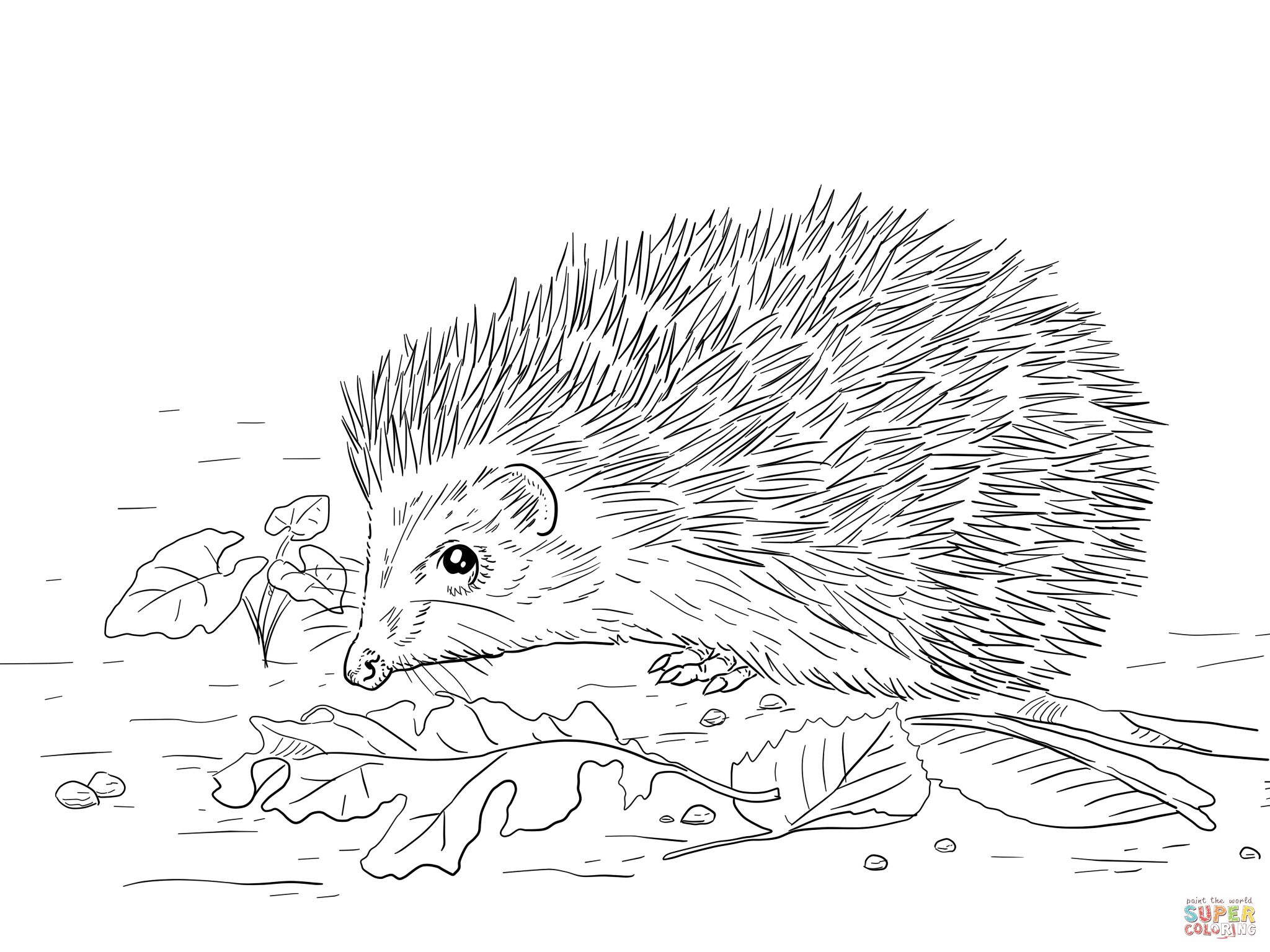 Coloring Pages Porcupine Coloring Page New In Concept Tablet ...