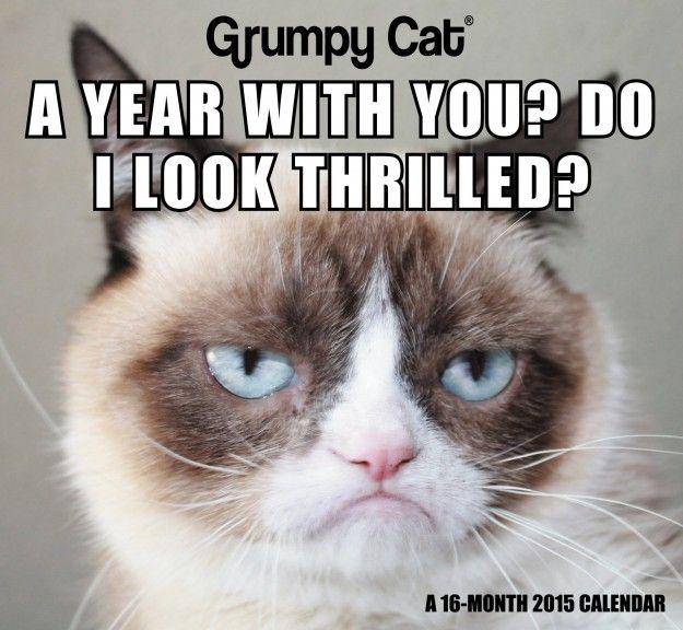 Dreadful Grumpy Cat Humor Grumpy Cat Meme Grumpy Cat