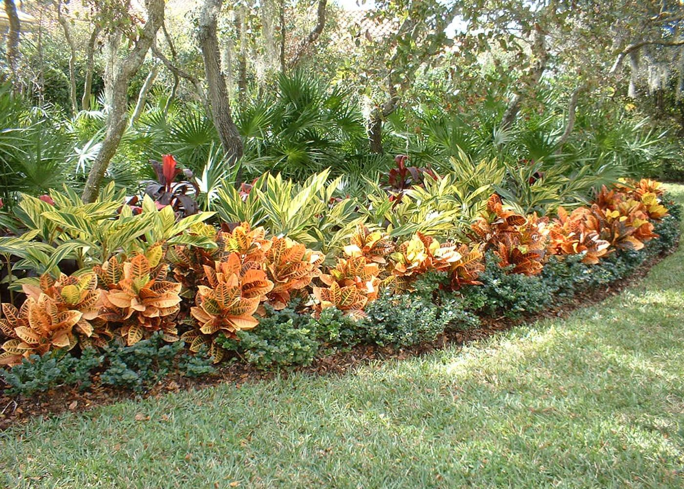 Croton Landscaping With Rocks Tropical Landscaping Garden