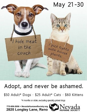Volunteer Posters Cat Shelter Google Search Animal Shaming Animal Rescue Pets