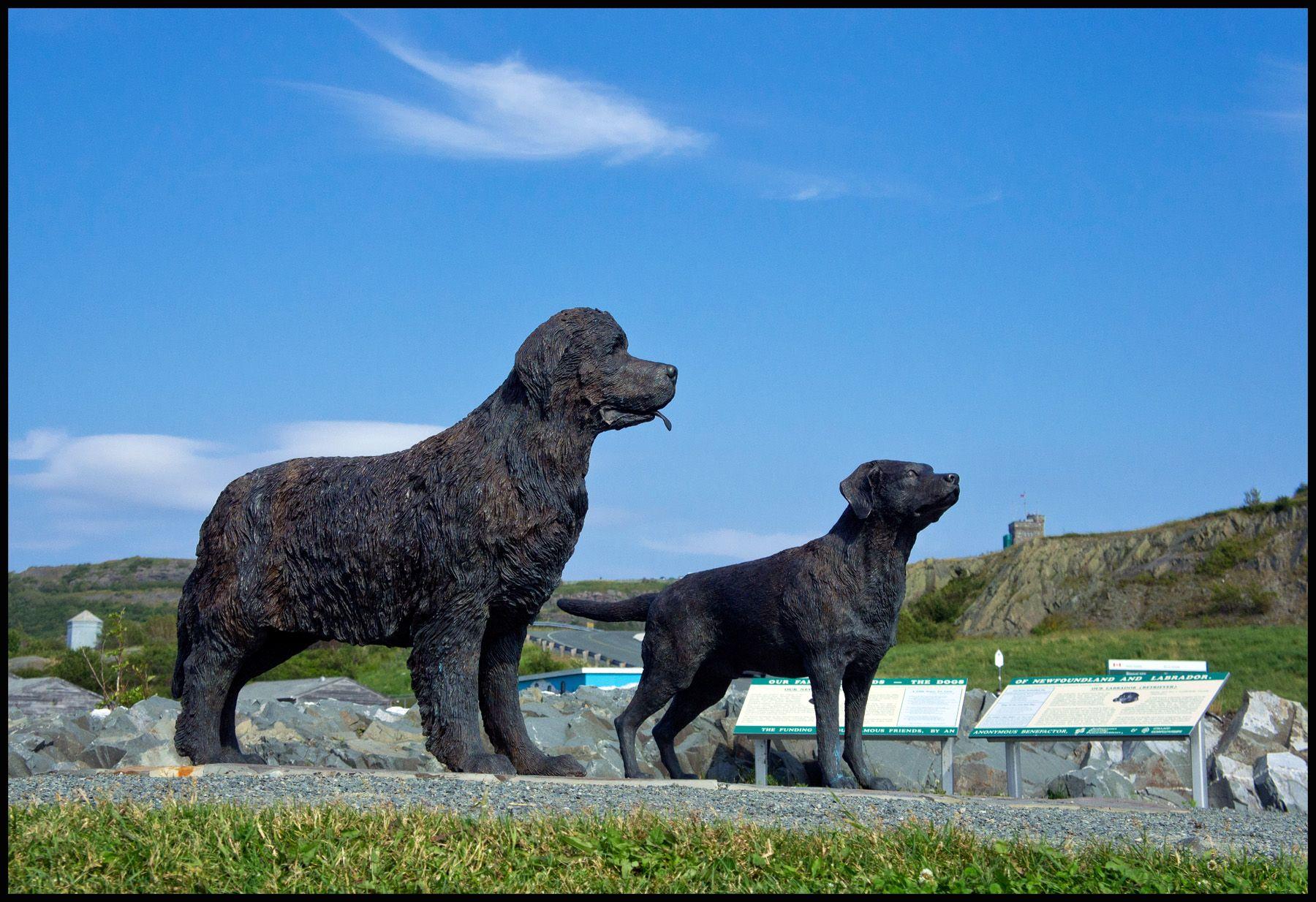 Newfoundland Dog and Labrador Retriever. Dogs of ...