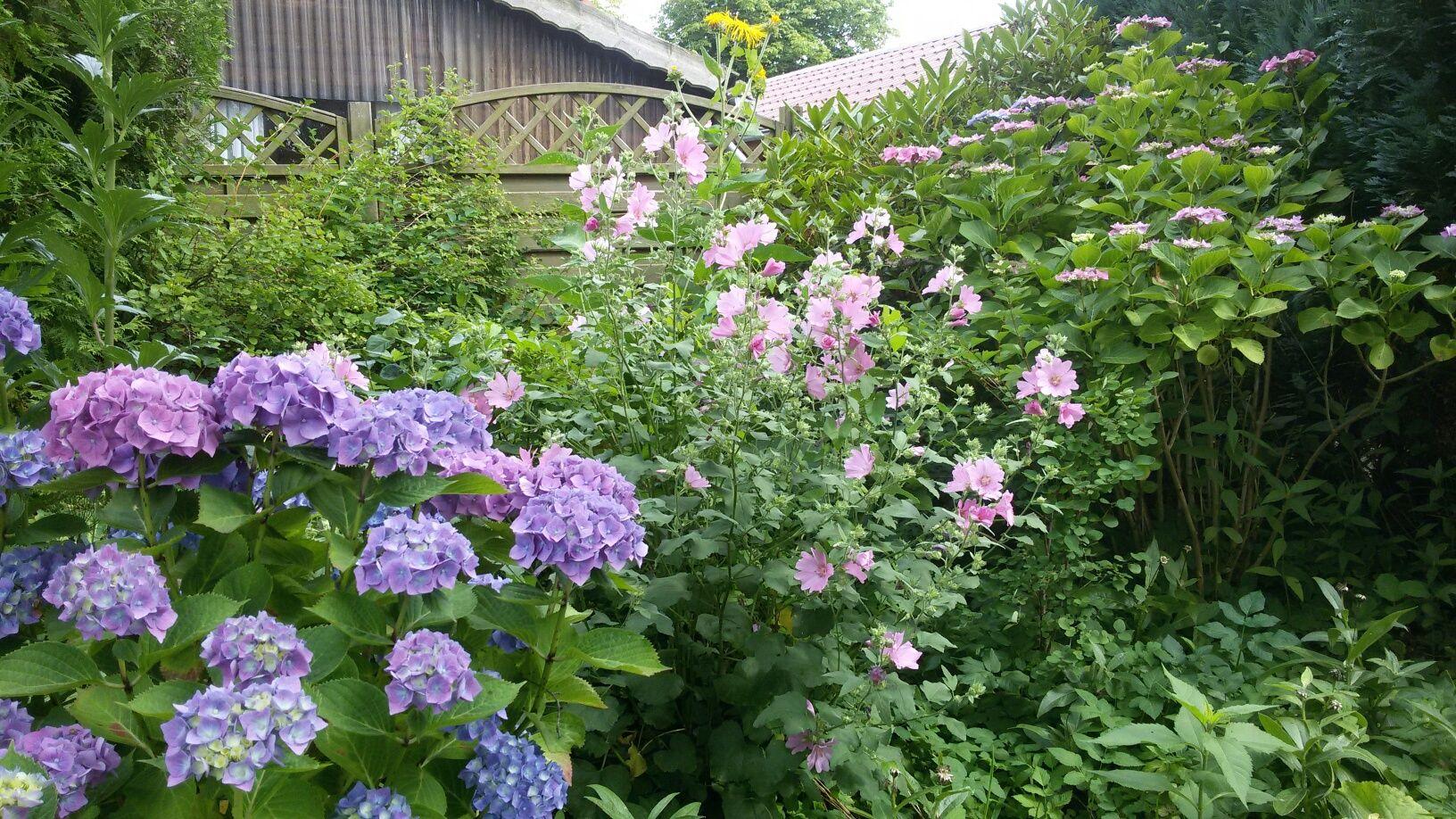 Autorenwissen-Gartenmord Obwohl ich Krimis schreibe, Leute um die Ecke bringe, Sachen verstecke und nicht gerade zimperlich mit Leichen umgehe, ist es doch erstaunlich, dass die Blumen in meinem Garten den Sommer überlebt haben. Bis jetzt jedenfalls. Es kommen ja noch ein paar Kapitel.
