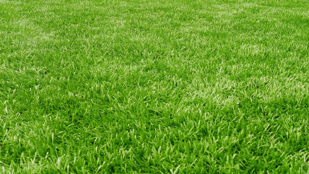 The Orioles Groundskeeper Walks Through 2 Types Of Grass How To Plant Seed And Her Trick To Prevent Warm Season Grass Green Grass Background Grass Background