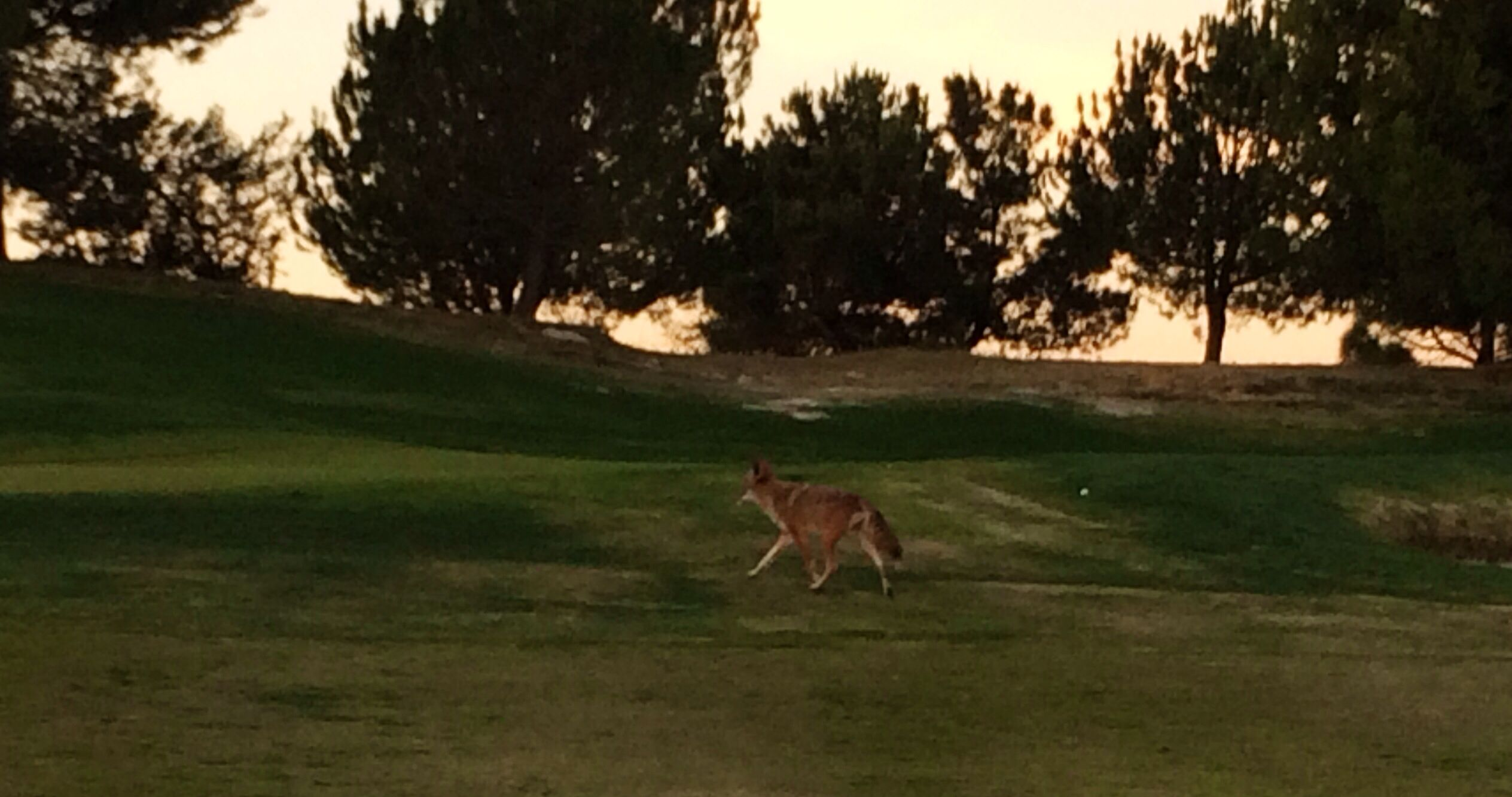 How about a new playing partner?!