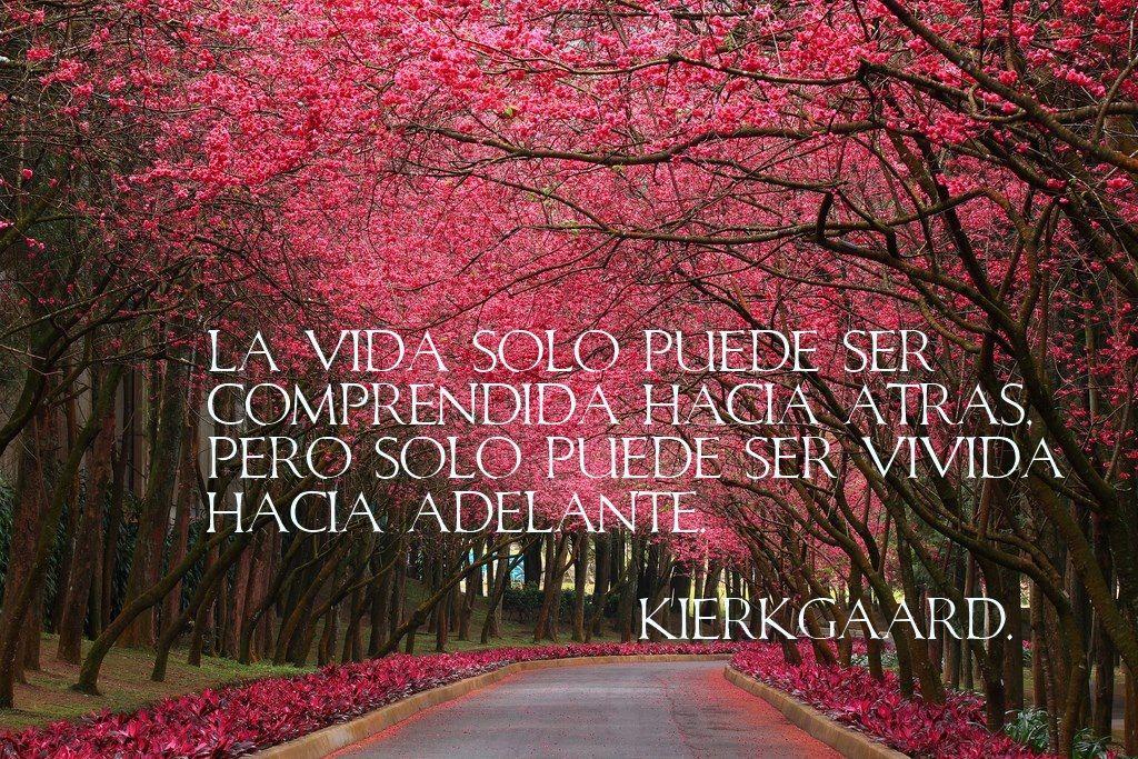 La vida solo puede ser comprendida hacia atrás pero solo puede ser vivida hacia adelante. -Kierk Gaard.