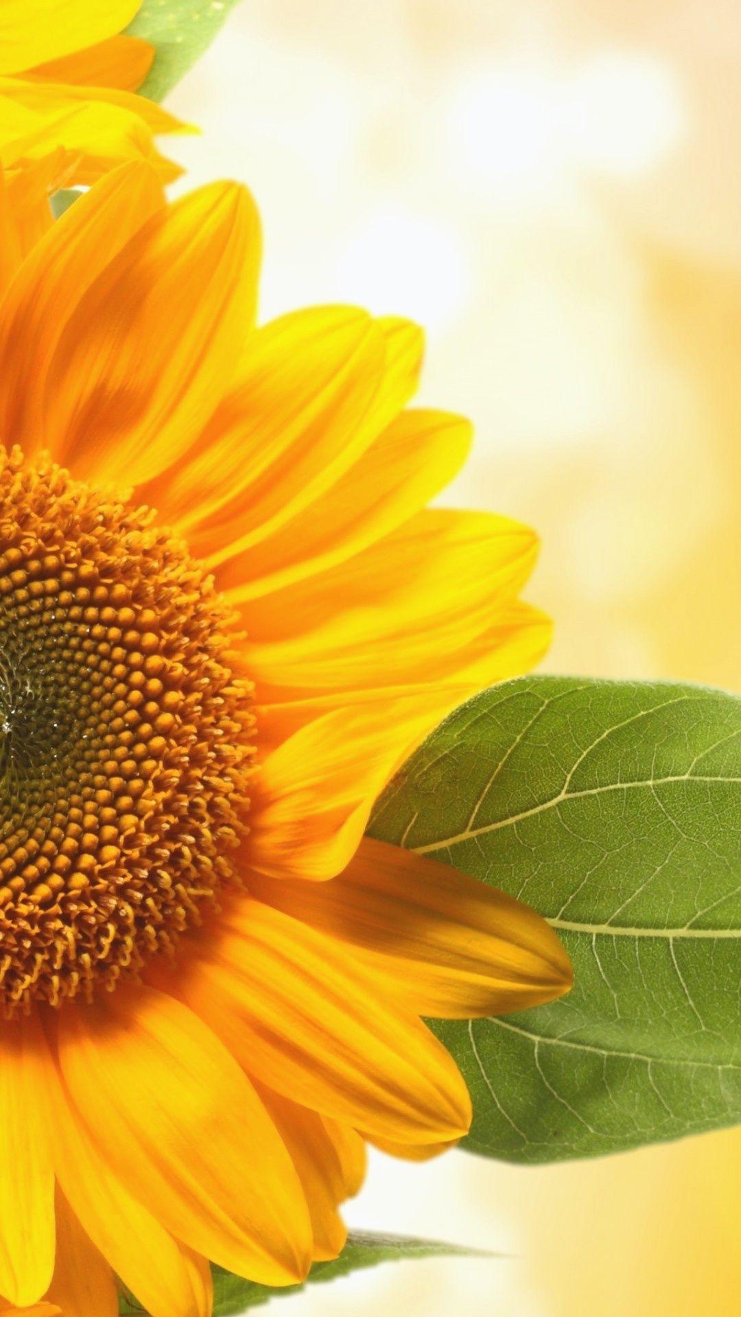Sunflower Wallpaper Hd Iphone | Sunflower wallpaper hd ...