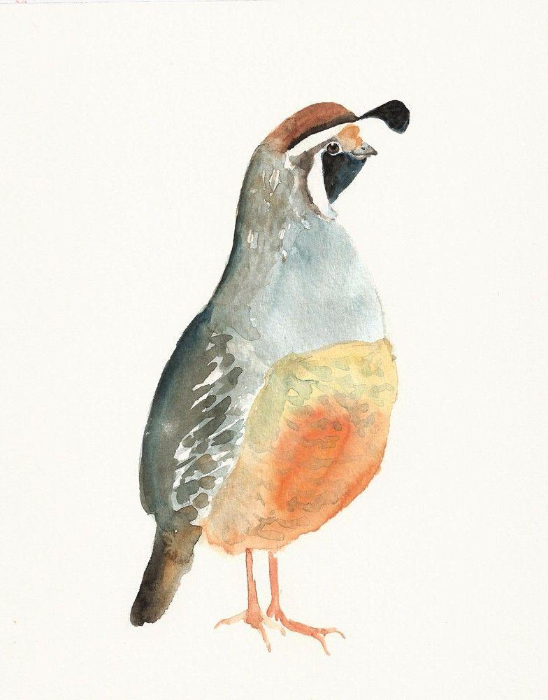 California quail by dimdi original watercolour painting