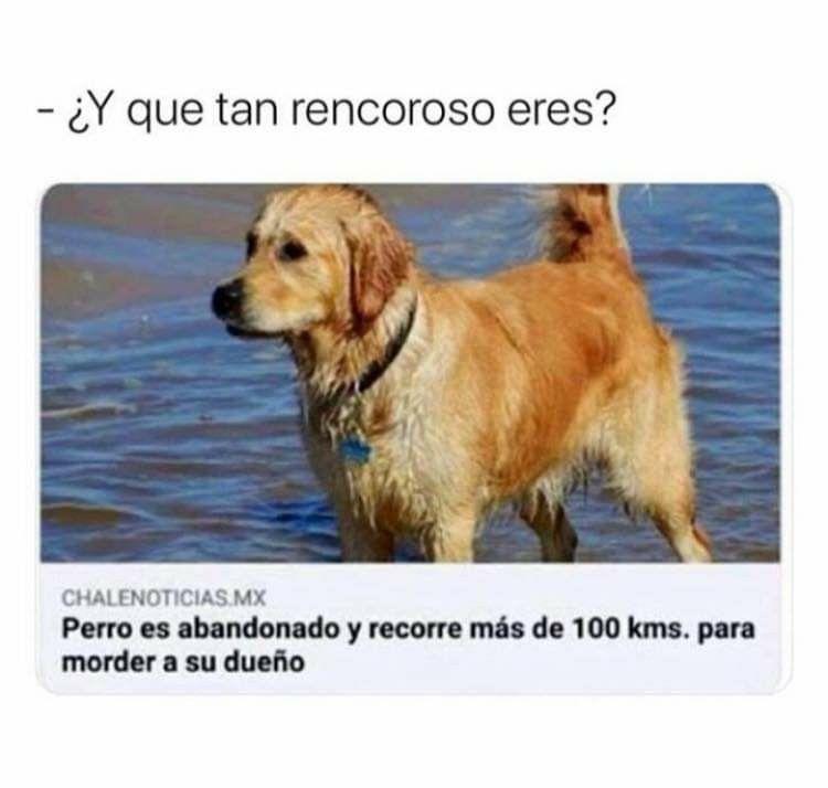 Pin De Humorguevon En Memes En Espanol Memes Memes Divertidos Memes Graciosos