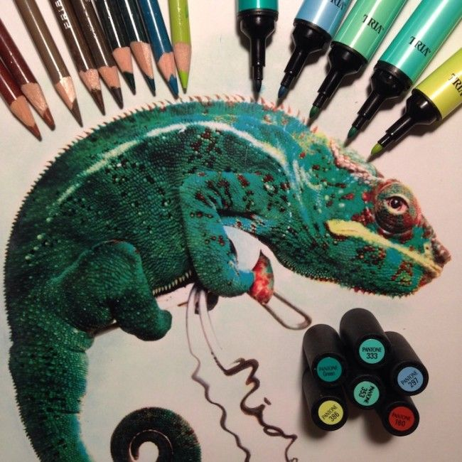 You Re Amazing Animals: Hyperrealism Alongside The Tools Used To Illustrate Them