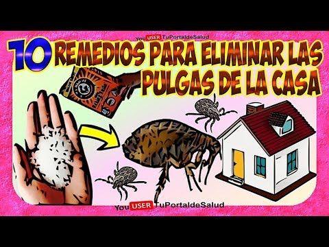 Como Eliminar Las Pulgas De Casa 10 Remedios Para Eliminar Matar Las Pulgas De La Casa Youtube Pulgas Pulgas Y Garrapatas Pulgas Perros