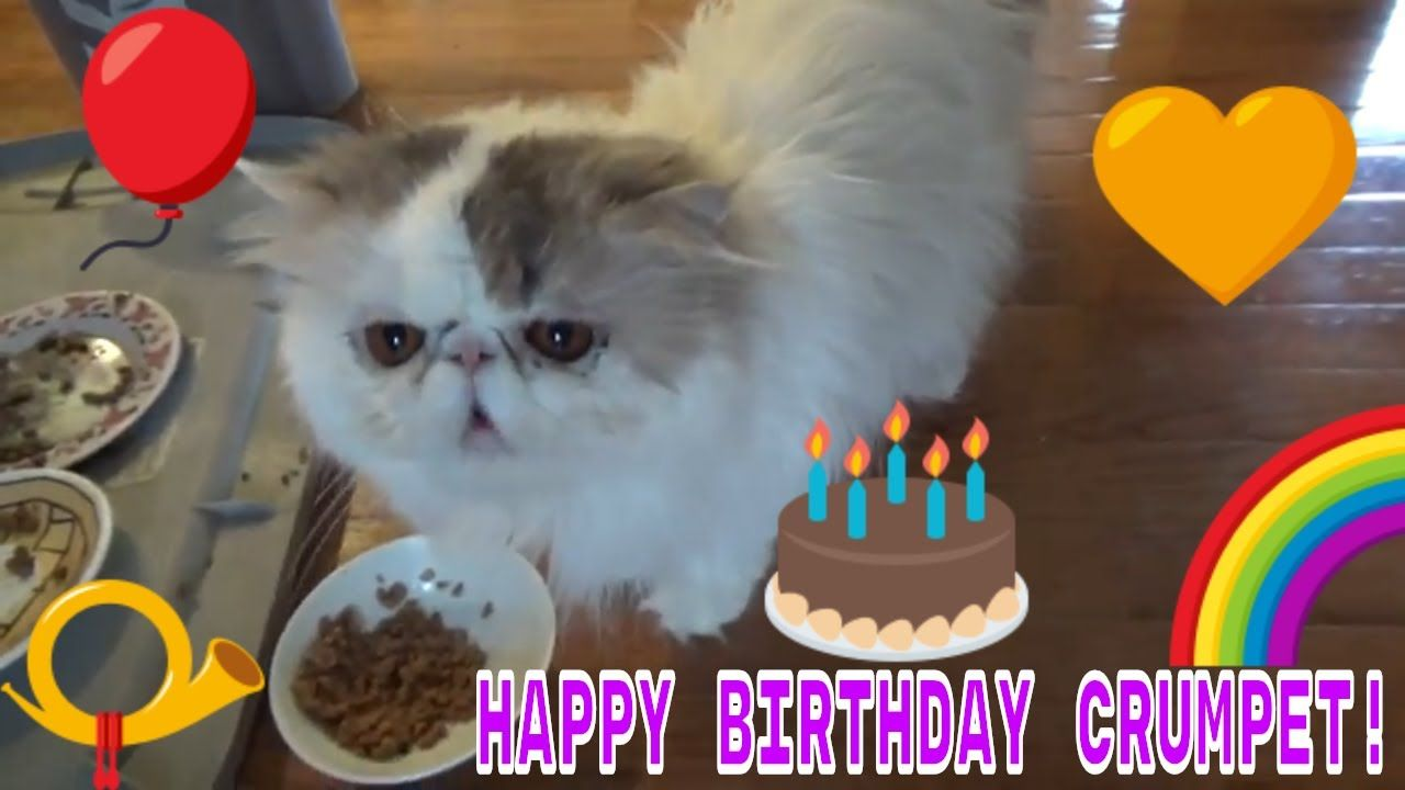 Crumpet Cat Turned 3 Years Old Cats 3 Years Old Crumpets