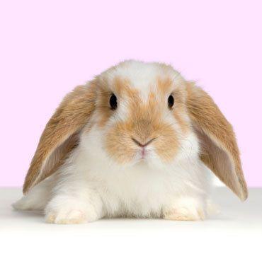 Cute rabbit - Anything Goes Photo (5516077) - Fanpop