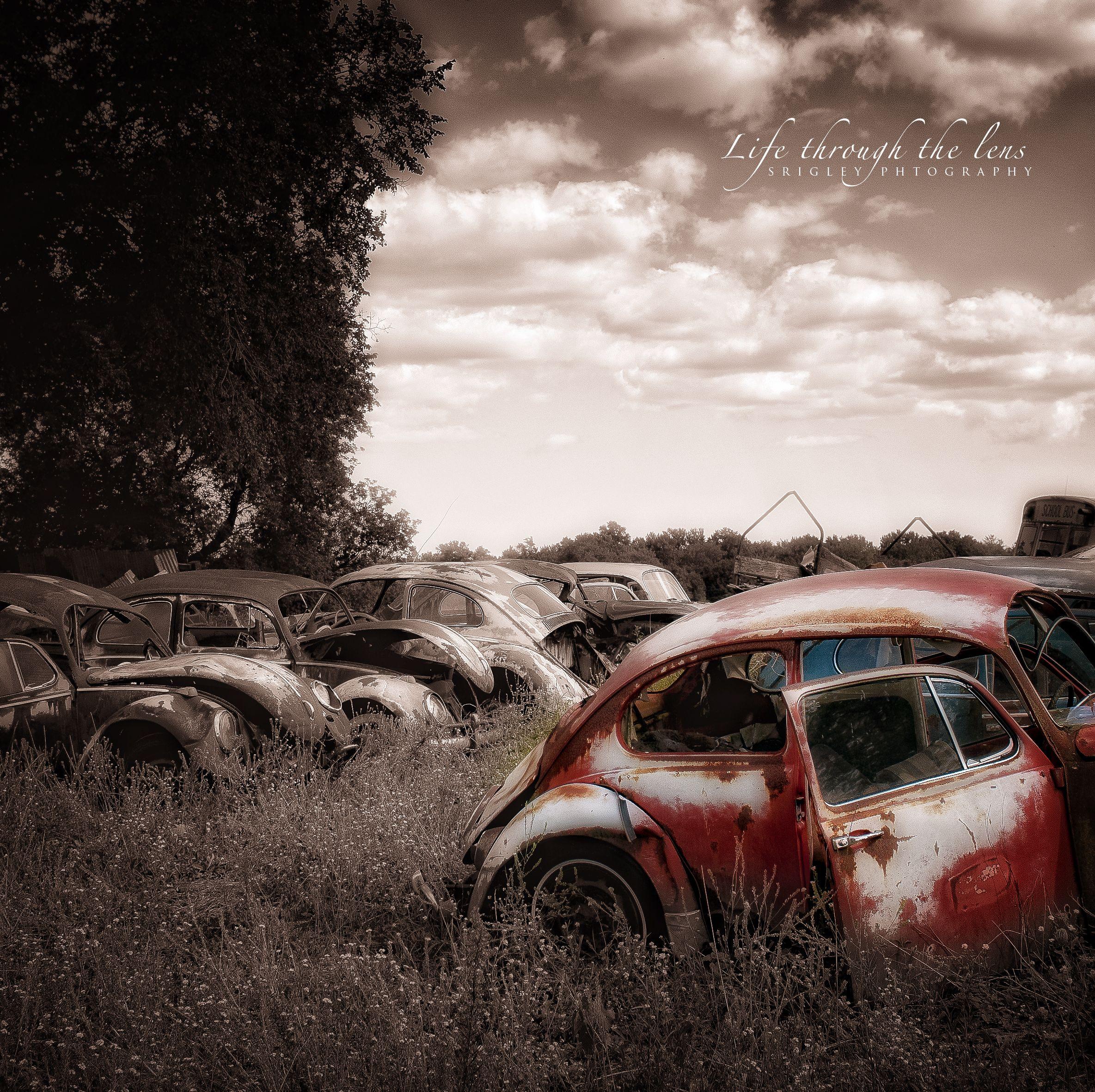 Bed Bugs / VW Retirement Village