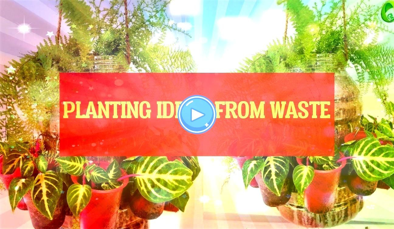 ideas from waste  ideen aus abfall pflanzen planting ideas from waste  planting ideas Unique  planting ideas Rose  planting ideas Sunflowerplanting ideas from waste  idee...