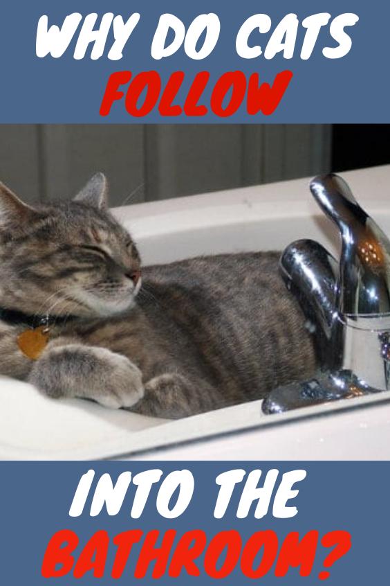 Why Do Cats Follow You Into The Bathroom Cats Tabby Cat Cats Love Cats Tabby Cute Cats Cats Cats Cat Eyes Cats Funny Lazy Cats Lazy Cat Beautiful Cats