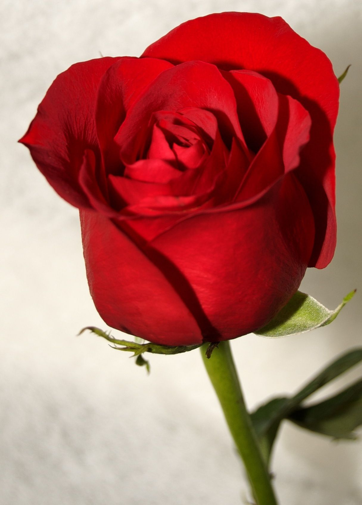 small pretty red rose wallpaper pretty girly wallpapers tumblr