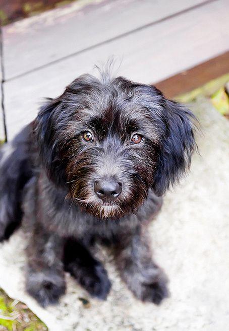 Terrier Mix Mutt Cute Pitbull Terrier Terrier Mix Cute Dogs