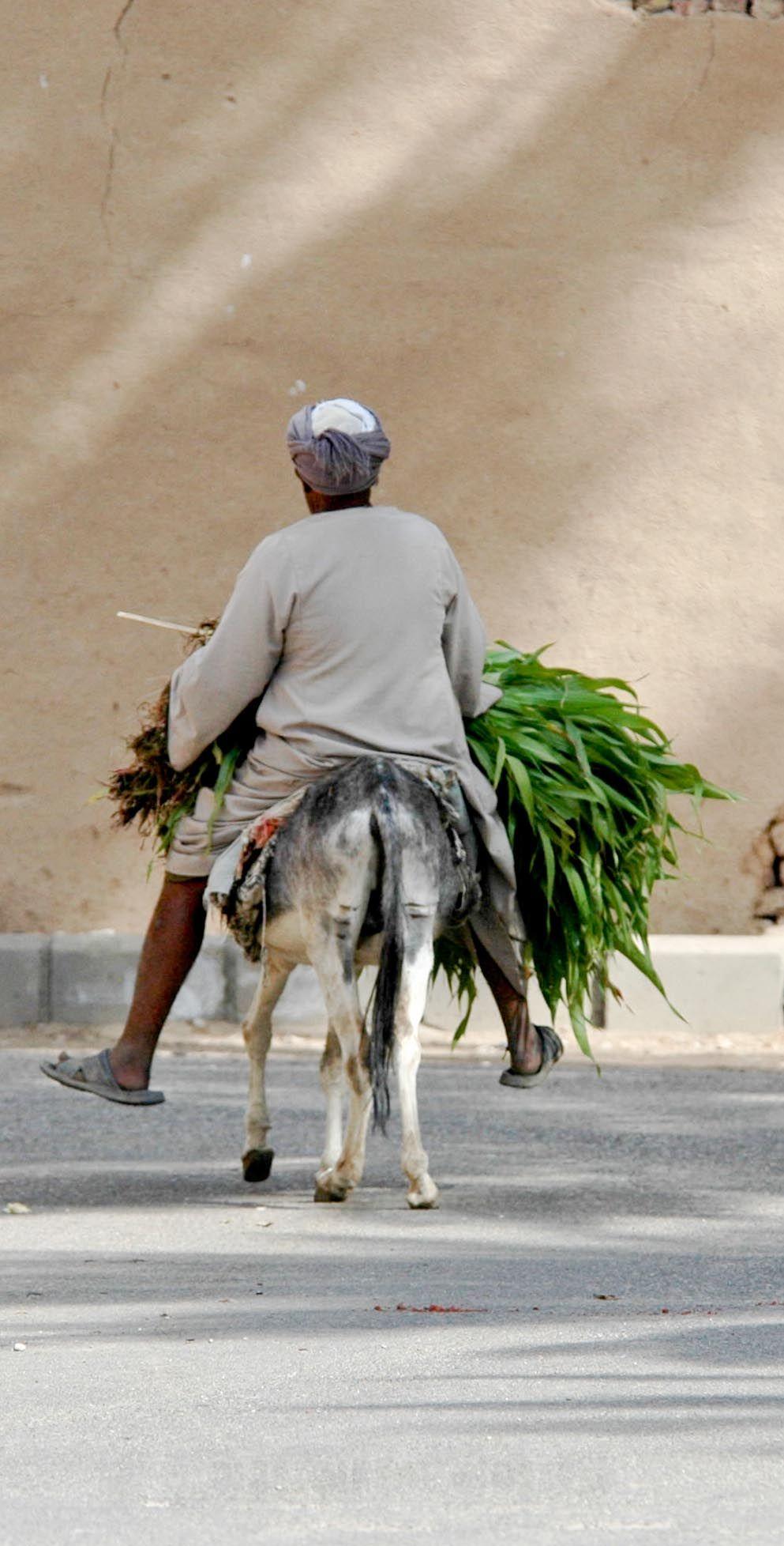 Hombre  transportando  alimento
