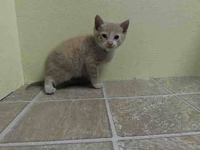 5 Weeks Old To Be Destroyed May 22 14 By Nyc Mathew Came With Martha Lucy And John Adorable Foursome Id Is A1000215 Cat Connection My Animal Animals
