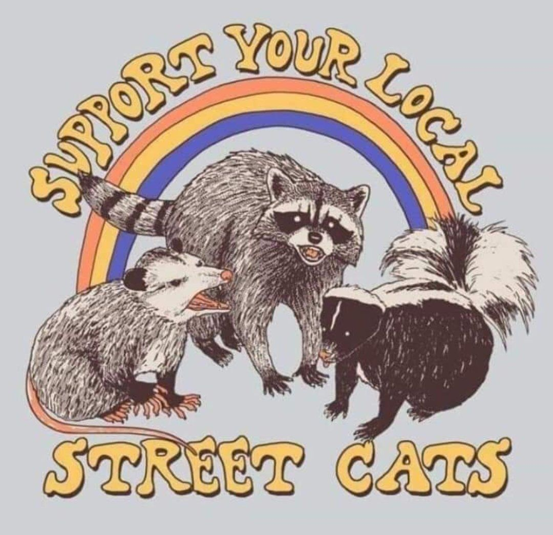 Support your local street cats trashpandas Funny
