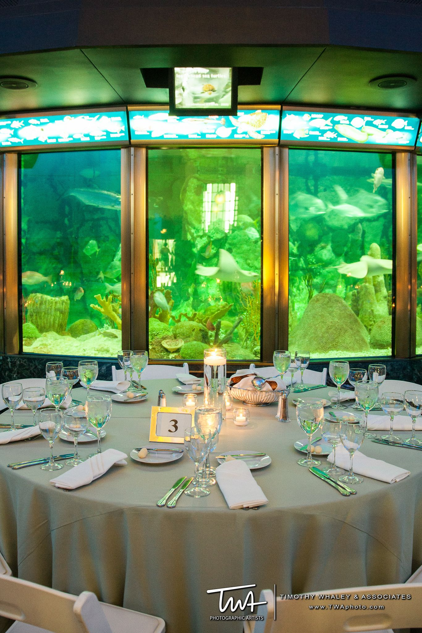 TWA Weddings at the Shedd Aquarium   Click the picture to ...