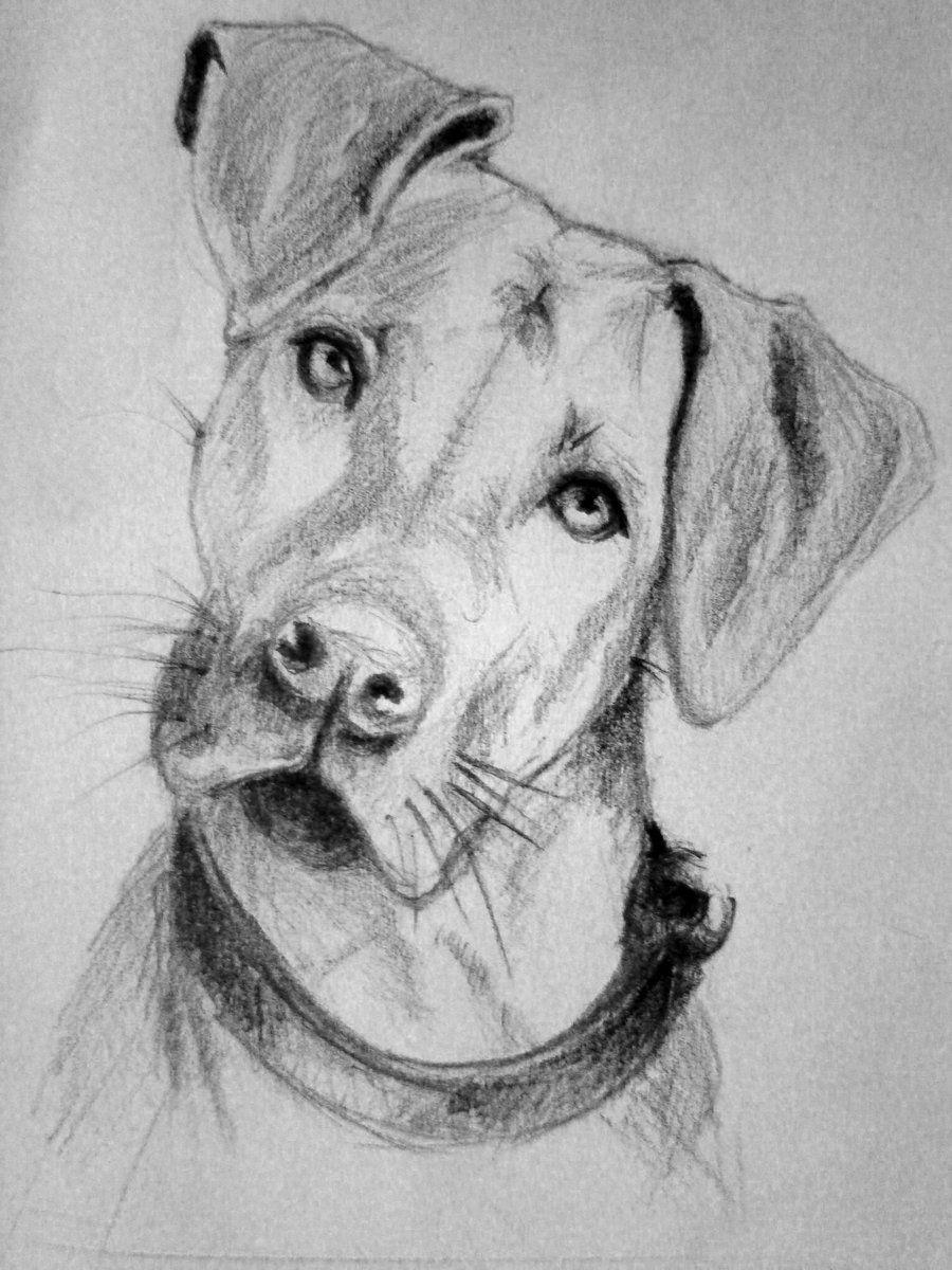 Dog sketch dog sketch realistic animal drawings dog