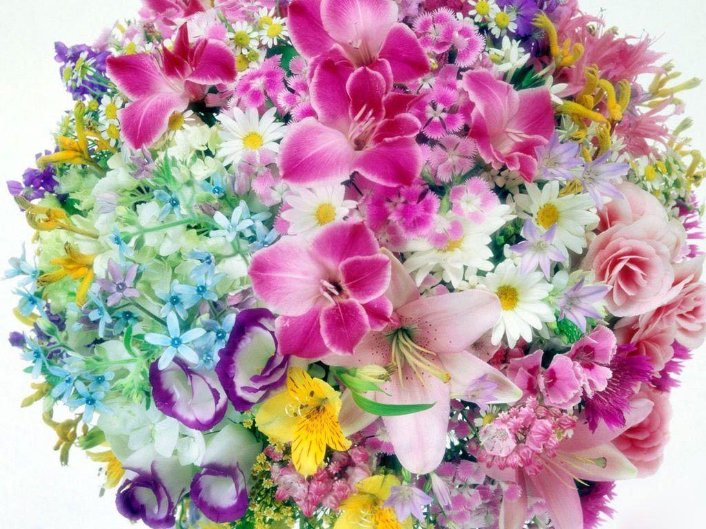 Colorful Floral Wallpaper Photo Qjr Flower Wallpaper Floral Wallpaper Desktop Trendy Flowers