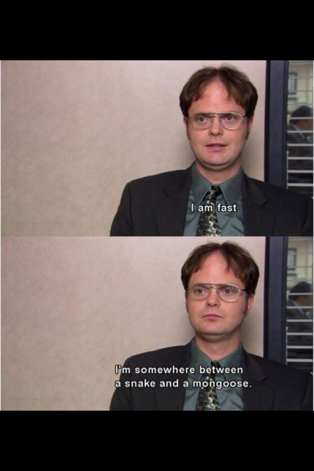 The Office Dwight Office Humor Office Memes Office Quotes