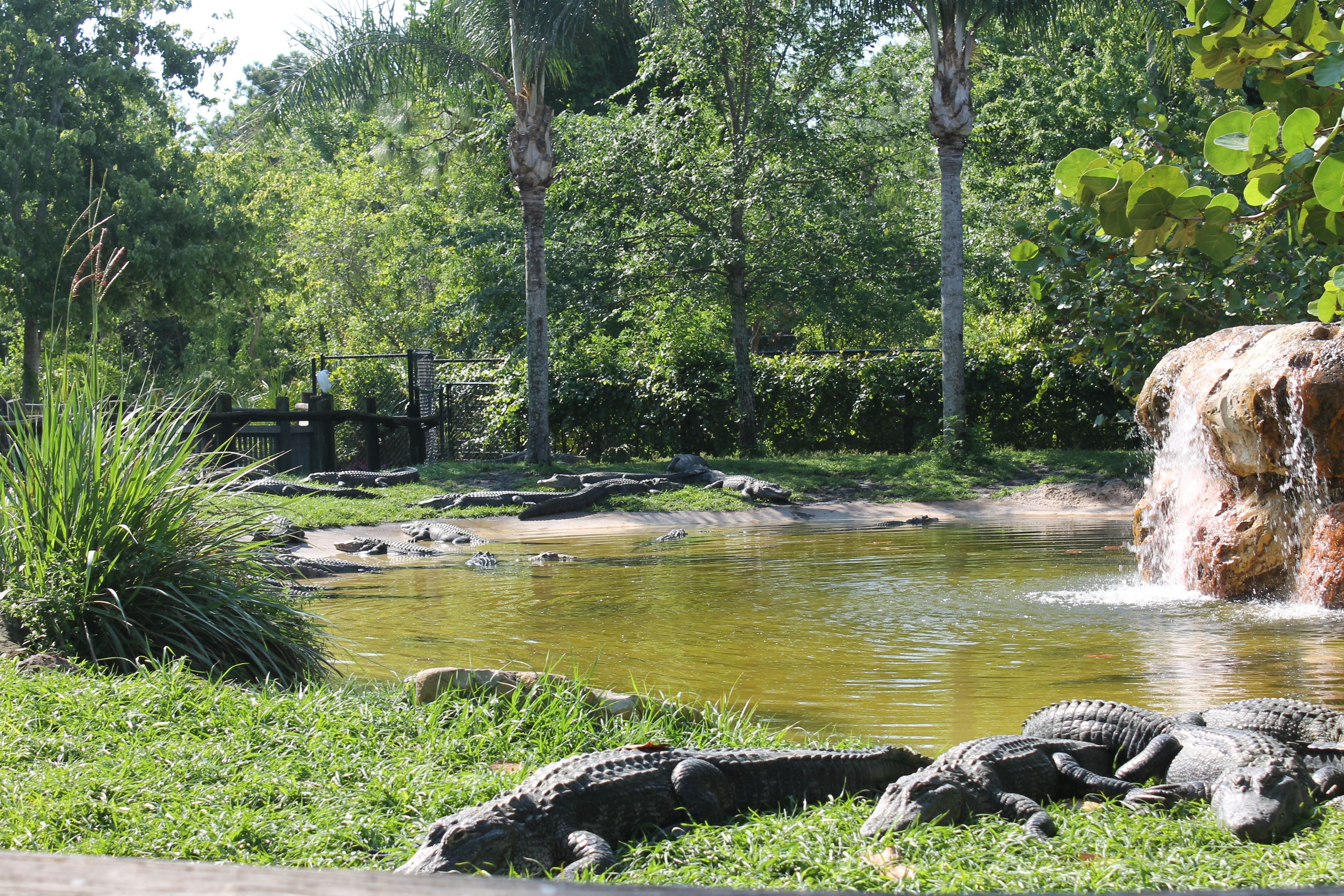 Gatorland off road experience