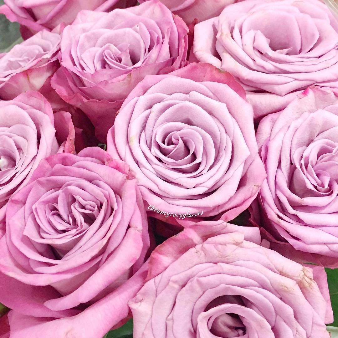 Lilac And Cotton Candy Pink Roses Happy Friday Roses London Beauty Bbloggers By Thrumyrosyglasses Pink Cotton Candy Pink Candy Pink Roses