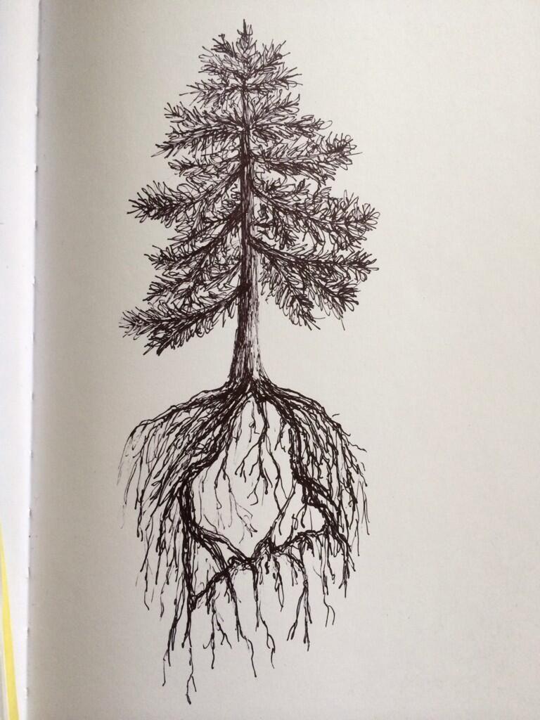 Pine Tree State Tattoo Design By Ramble Inthe Roots On Deviantart Tree Tattoo Men Tree Tattoo Arm Tree Tattoo Forearm