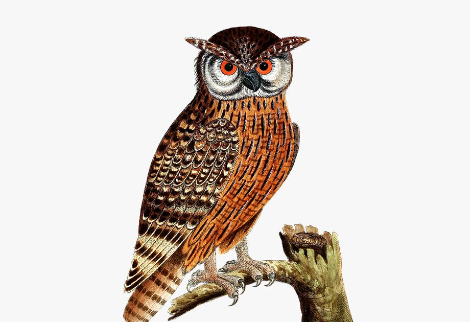 28 Gambar Kartun Hitam Putih Burung Kolase Gambar Burung Hantu Transparent Cartoon Free Download Romantis Gifs Tenor Do Gambar Burung Burung Gambar Kartun