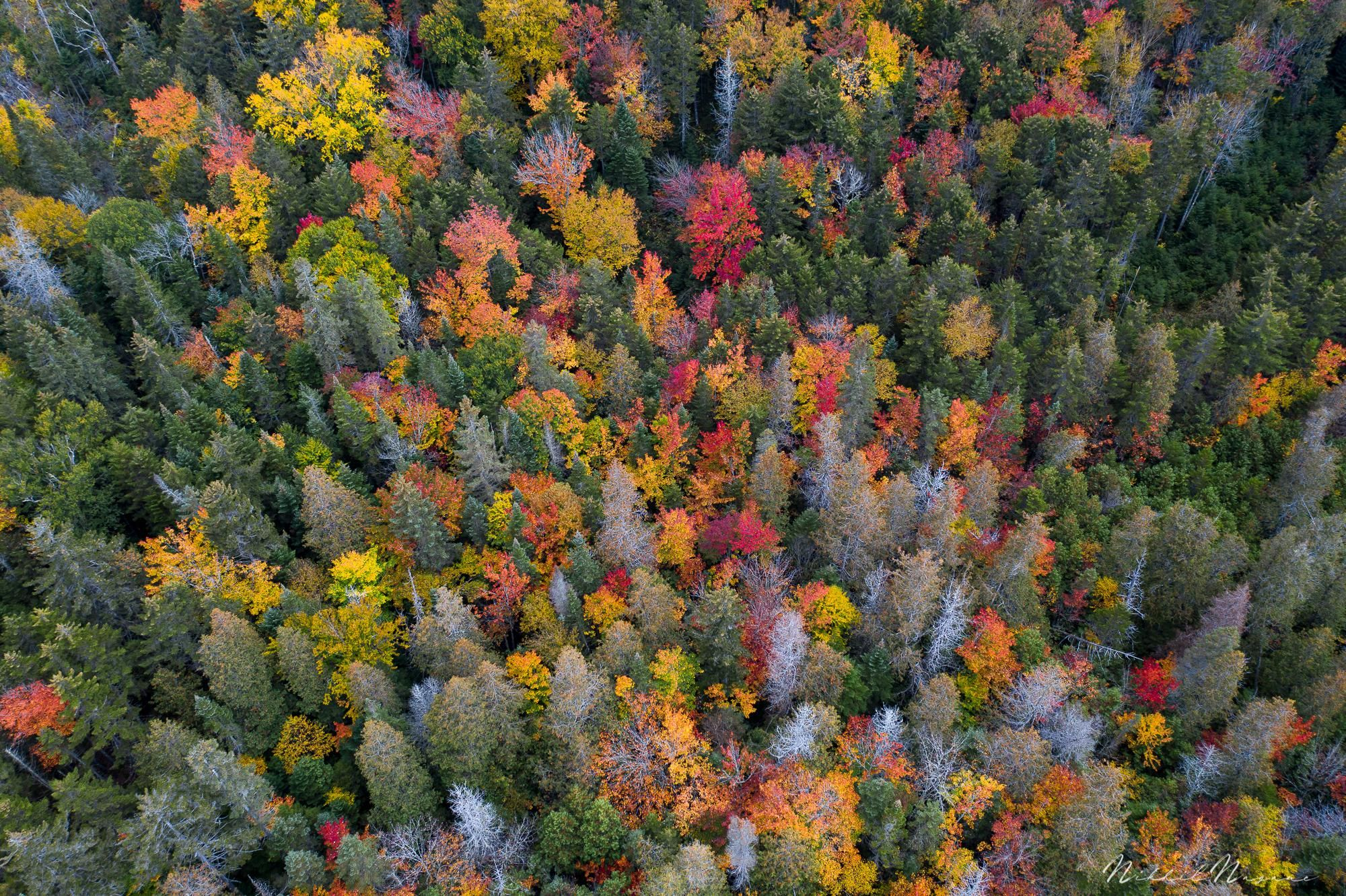 Photo of Fall foliage of Adirondack mountains in NY [2000X1332] –  #photography #amazing …