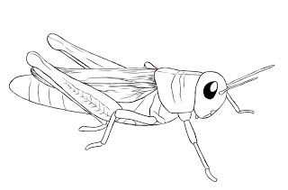 How To Draw A Grasshopper - Draw Central