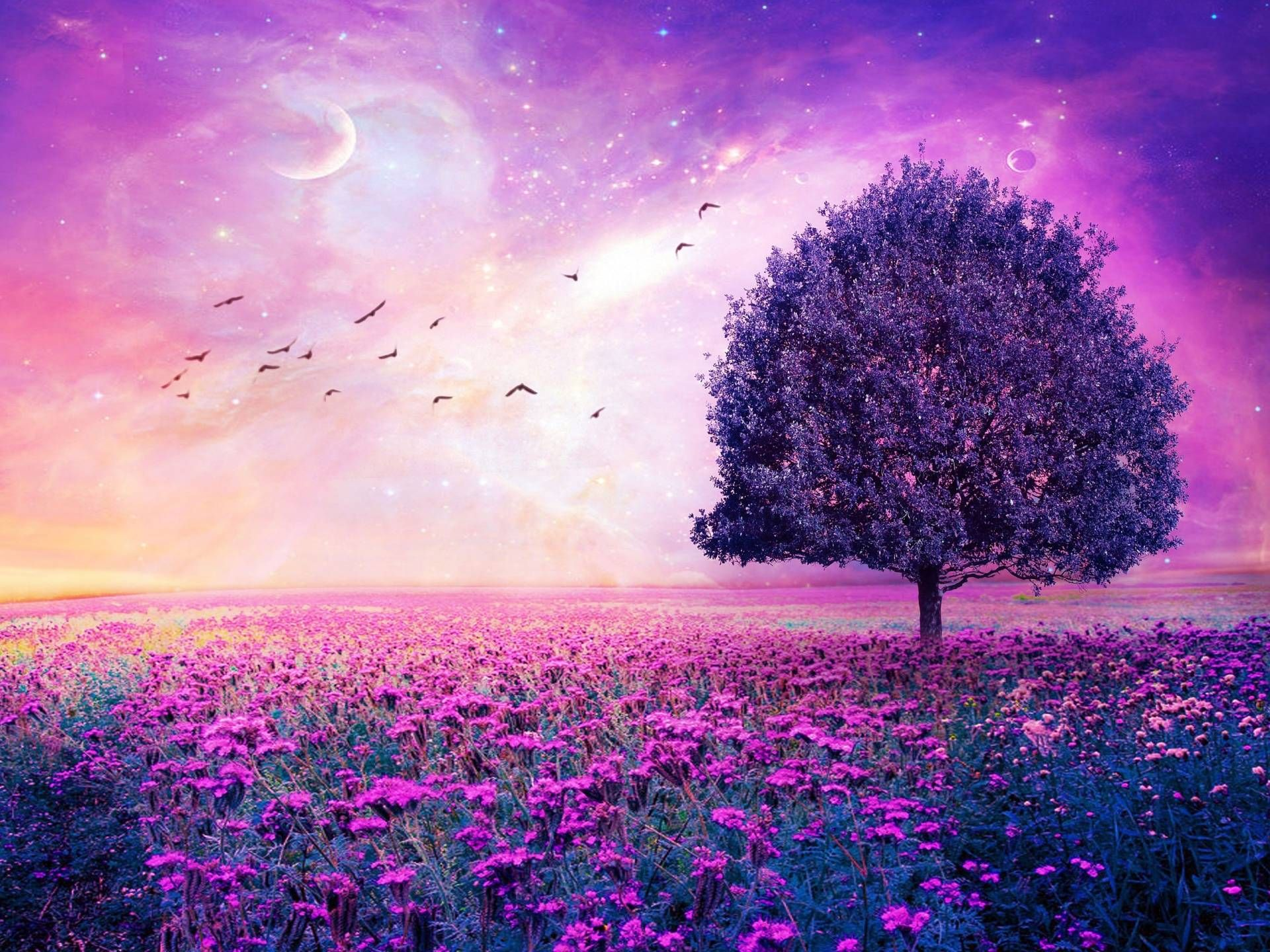 purple flowers field art tree hd wallpapers - high definition