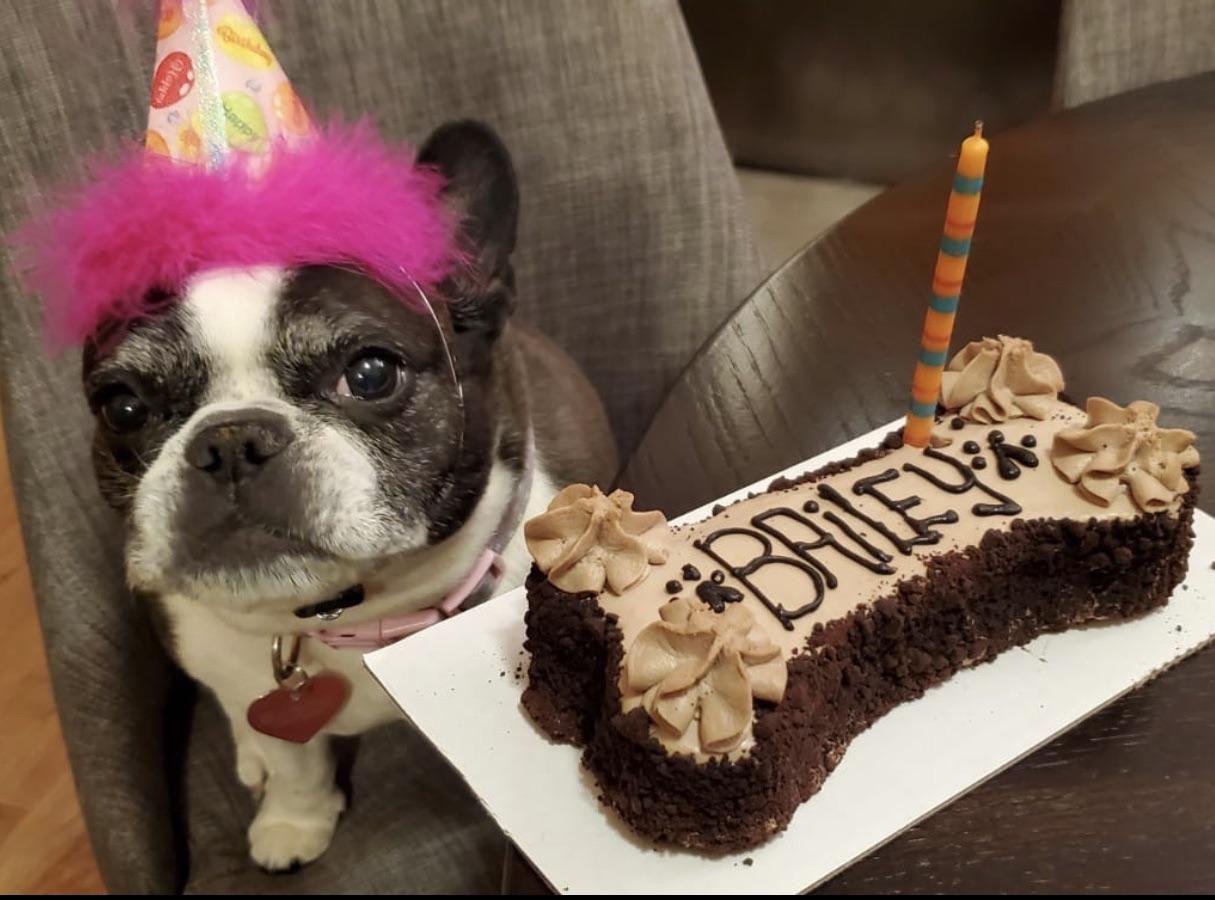 Happy birthday the cutest french bulldog ever