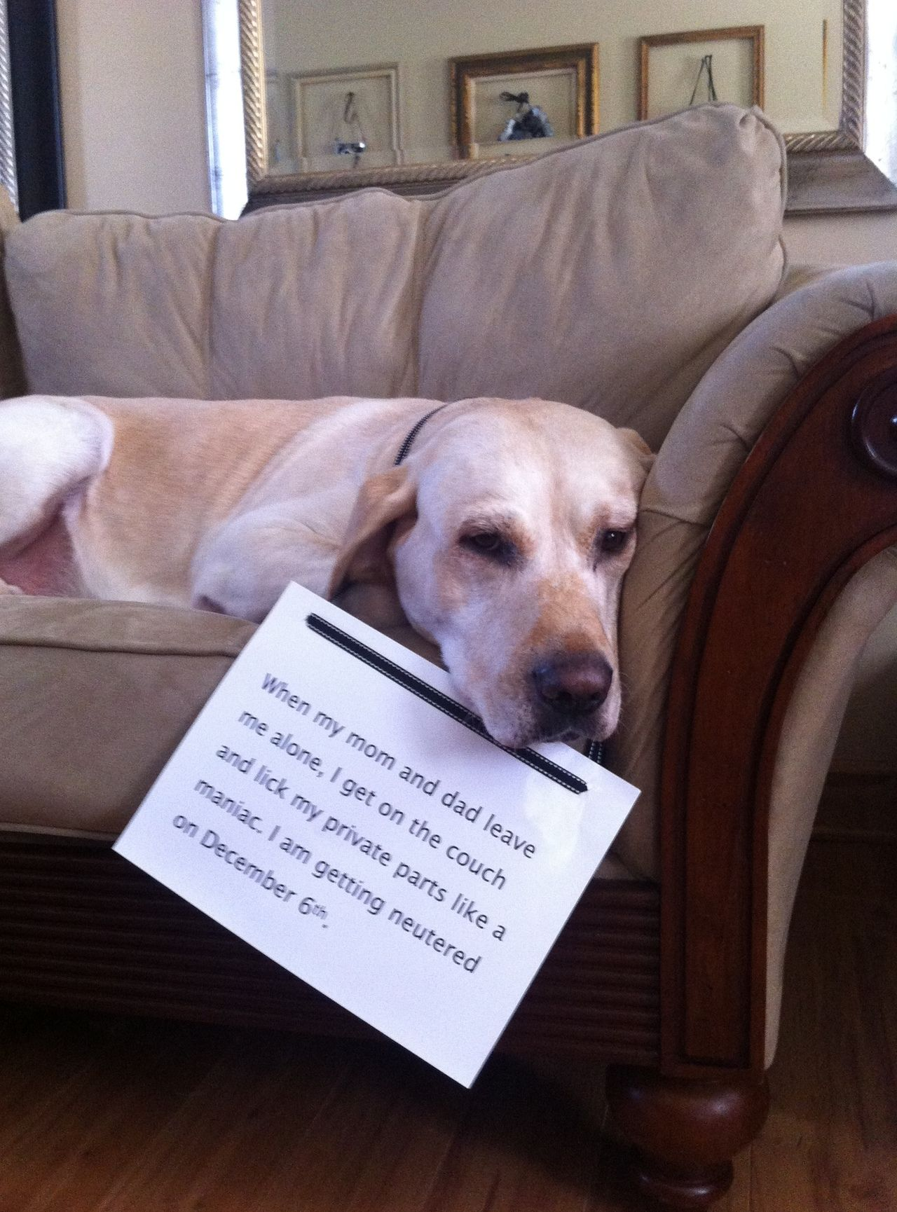 Dog Shame When My Mom And Dad Leave Me Alone I Get On The Mom And Dad Dog Shaming My Mom
